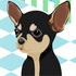 Jeu gratuit Chihuahua � la mode